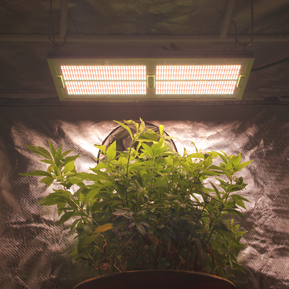 What is the full spectrum grow lights?