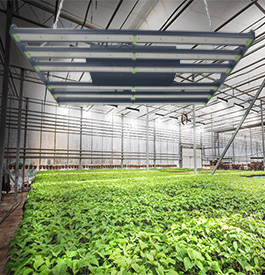 Farmer grow light