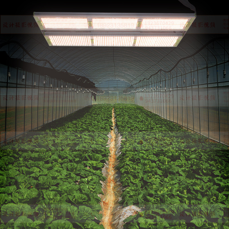 The role of full-spectrum plant grow lights.