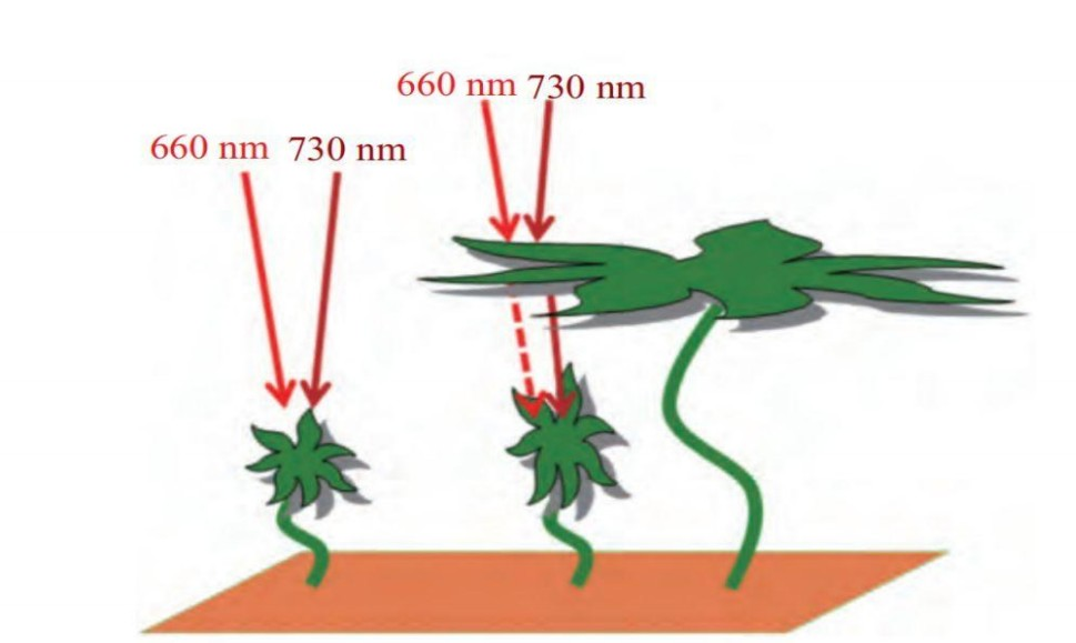 Two major effects of 730nm far-red LED on plants